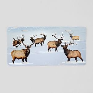 Northern bull elk Aluminum License Plate