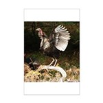 Turkey Flapping Wings Mini Poster Print