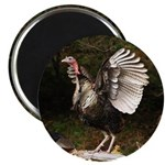 Turkey Flapping Wings Magnet