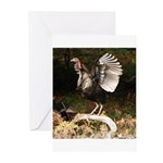 Turkey Flapping Wings Greeting Cards (Pk of 10)