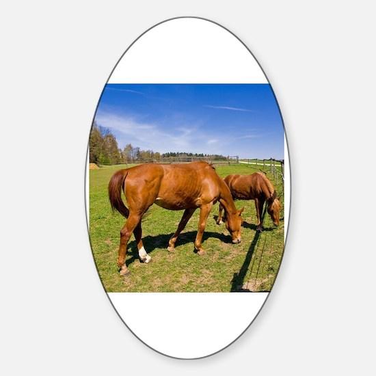 Horse eye Sticker (Oval)