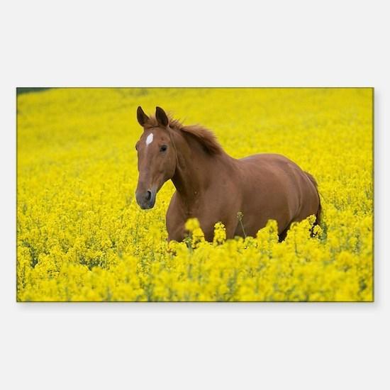 Cool Horse eye Sticker (Rectangle)