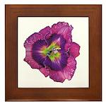 Lavender Eye Daylily Framed Tile