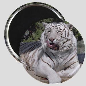 White Tiger 10 Magnet