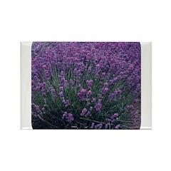 Lavandula - Lavender Rectangle Magnet