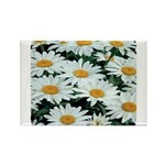 Shasta Daisies Rectangle Magnet (100 pack)