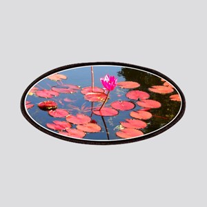 water lily, garden pond photo Patch
