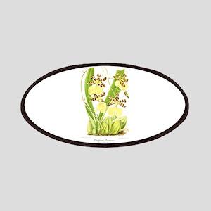 L'Illustration Horticole Ocidium Bakerri 2 Patch