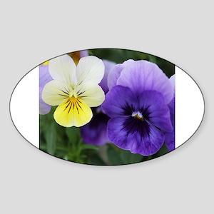 Italian Purple and Yellow Pansy Flowers Sticker