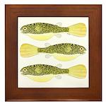 Mbu Giant Freshwater Puffer fish Framed Tile