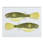African Tropical Fishes 4 Fish Wall Calendar