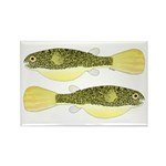 Mbu Giant Freshwater Puffer fish Magnets