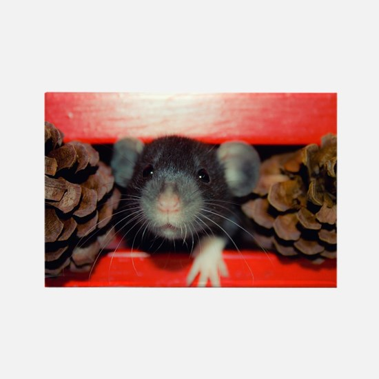 Funny Dumbo rat Rectangle Magnet