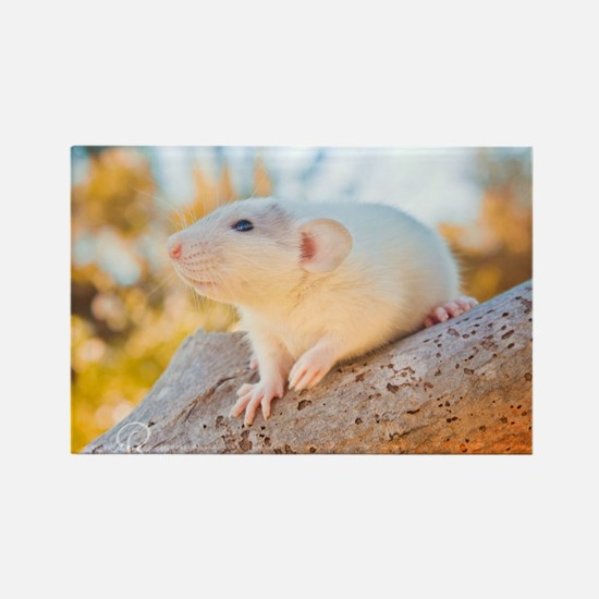Unique Dumbo rat Rectangle Magnet