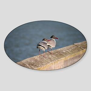 gulls on rail Sticker