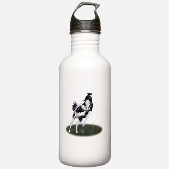Rearing Black and White Overo Paint Horse Water Bo