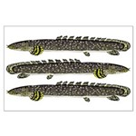Ornate Bichir Posters