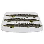 Ornate Bichir Bathmat