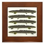 Ornate Bichir Framed Tile