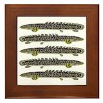 Ornate Bichir Framed Tile
