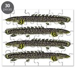 Ornate Bichir Puzzle