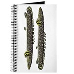 Ornate Bichir Journal