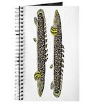 Ornate Bichir Journal