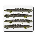 Ornate Bichir Mousepad