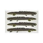 Ornate Bichir Magnets