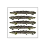 Ornate Bichir Sticker