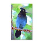 Steller's Jay Rectangle Car Magnet
