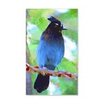 Steller's Jay 20x12 Wall Decal