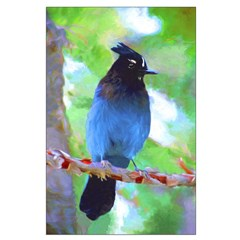 Steller's Jay Posters