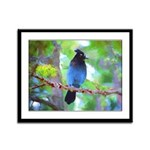 Steller's Jay Framed Panel Print