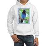Steller's Jay Hooded Sweatshirt