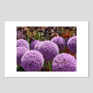 alliums Postcards (Package of 8)