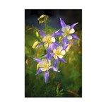 Colorado Blue Columbine Mini Poster Print