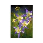 Colorado Blue Columbine Rectangle Magnet