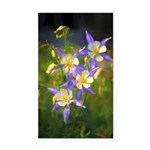Colorado Blue Columbine Rectangle Car Magnet