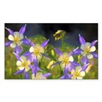 Colorado Blue Columbine Sticker (Rectangle)