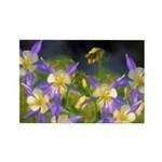 Colorado Blue Columbine Rectangle Magnet (10 pack)