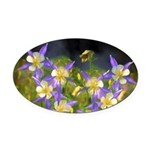 Colorado Blue Columbine Oval Car Magnet