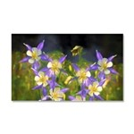 Colorado Blue Columbine Car Magnet 20 x 12