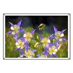 Colorado Blue Columbine Banner