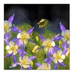 Colorado Blue Columbine Square Car Magnet 3