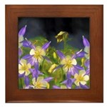 Colorado Blue Columbine Framed Tile