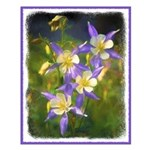 Colorado Blue Columbine Small Poster
