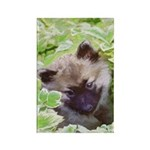 Keeshond Puppy Rectangle Magnet (100 pack)