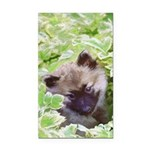 Keeshond Puppy Rectangle Car Magnet