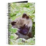 Keeshond Puppy Journal